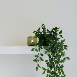 balda para planta